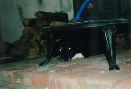 Buddy Loved To Lay By The Fireplace