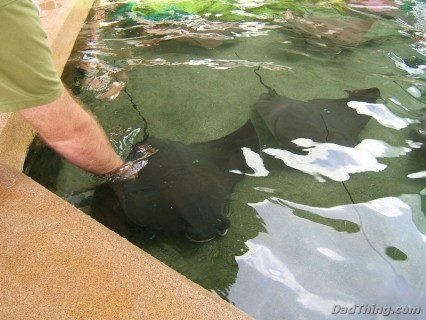 Sea World - Petting The Sting Rays