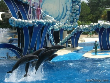 Sea World - The Dolphin Show
